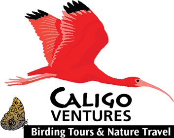 Caligo Ventures - Birding Tours & Nature Travel