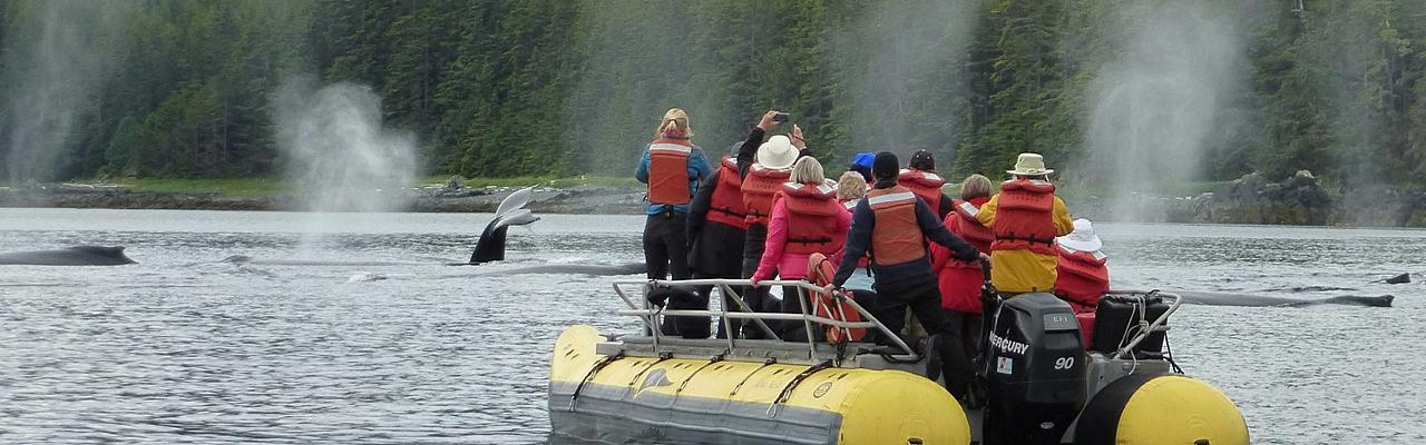 Whale Watching in Alaska, Alaska, Alaska Cruise, Alaska Nature Cruise, Naturalist Journeys