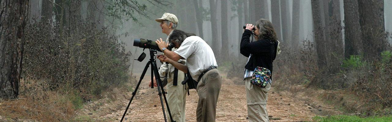 Texas, Texas Coast, Big Thicket, Texas Birding Tour, Spring Migration Tour, Texas Migration Tour, Texas Nature Tour, Naturalist Journeys