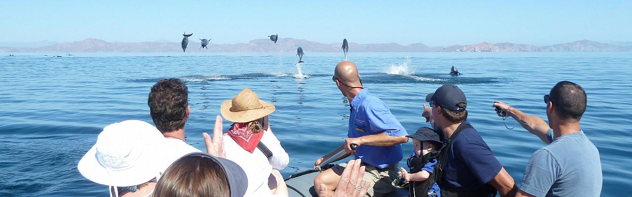 Dolphins, Baja, Sea of Cortez Cruise, Baja Cruise, Sea of Cortez Birding Cruise, Baja Birding Cruise, Sea of Cortez Nature Cruise, Baja Nature Cruise, Naturalist Journeys