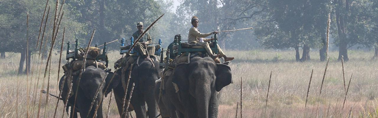 Elephant Tour, Mahout, India, India Nature Tour, India Wildlife Tour, India Wildlife Safari, Naturalist Journeys