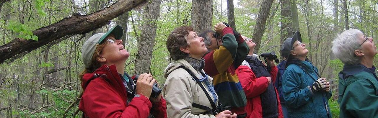 Warbler Migration, Ohio, Magee Marsh, Maumee Bay, Spring Migration Tour, Bird Migration Tour, Naturalist Journeys