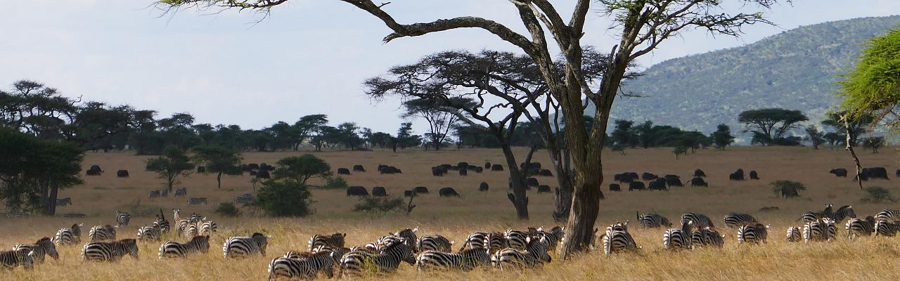 Kenya, Kenya Safari, Kenya Wildlife Safari, African Safari, Kenya Birding Tour, Naturalist Journeys