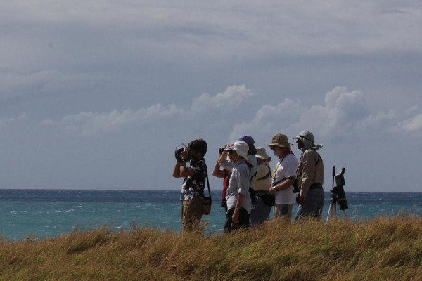 Birding the Caribbean, Puerto Rico, Dominican Republic, Naturalist Journeys, Caribbean Birding Tour