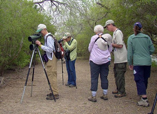 Estero Llano Grande State Park, South Texas, Naturalist Journeys, Texas Birding Tour