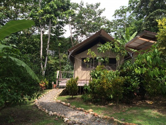 Canopy Camp, Darien, Panama, Naturalist Journeys, Panama Birding Tour