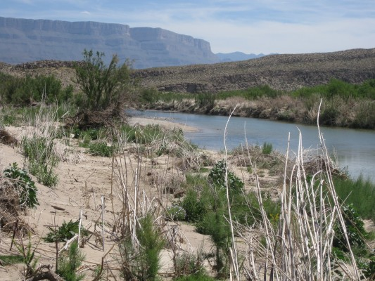 Rio Grande, Big Bend National Park, Texas, Naturalist Journeys, Big Bend Nature Tour, Big Bend Birding Tour