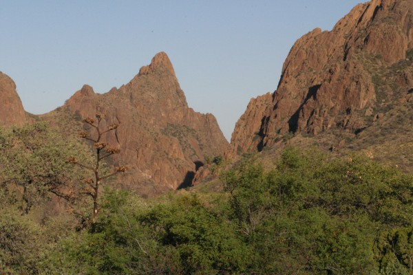 Big Bend National Park, Big Bend Nature Tour, Big Bend Birding Tour, Big Bend Natural History Tour, Naturalist Journeys