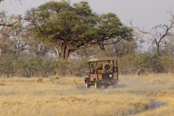 On Safari, Okavango Delta, Botswana, African Safari, Botswana Safari, Naturalist Journeys