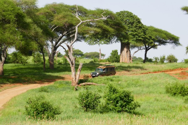 Safari Drive, Kenya, Kenya Safari, Kenya Wildlife Safari, African Safari, Kenya Birding Tour, Naturalist Journeys