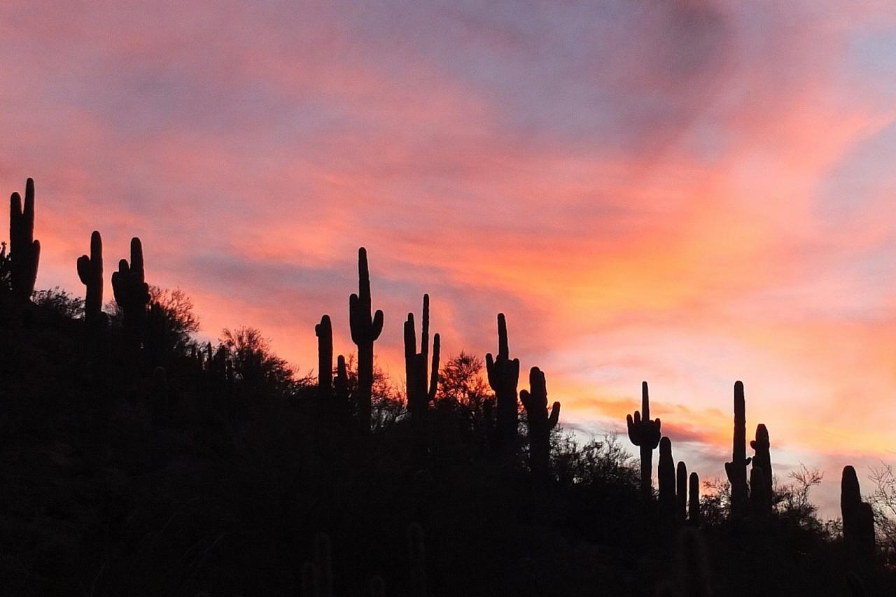 Saguaro Sunset, Arizona, Arizona Nature Tour, Arizona Birding Tour, Naturalist Journeys