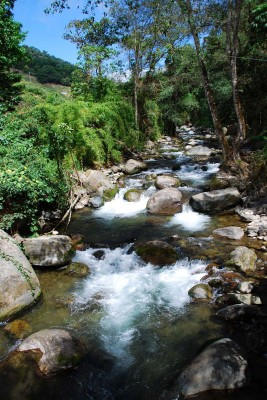 Savegre River, Costa Rica, Costa Rica Nature Tour, Costa Rica Birding Tour, Winter Costa Rica Tour, Naturalist Journeys