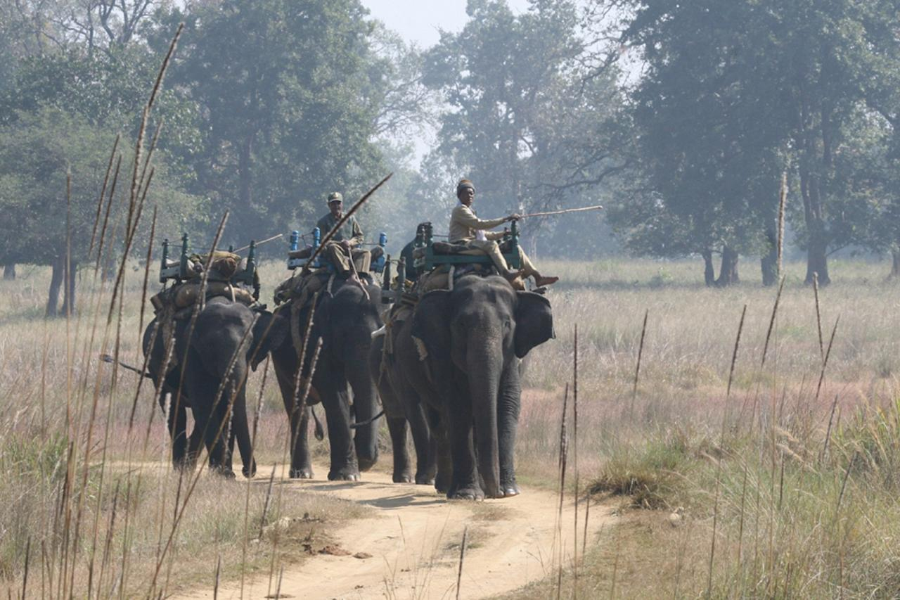 Elephant Walks, India Nature Tour, India Wildlife Tour, India Wildlife Safari, Naturalist Journeys