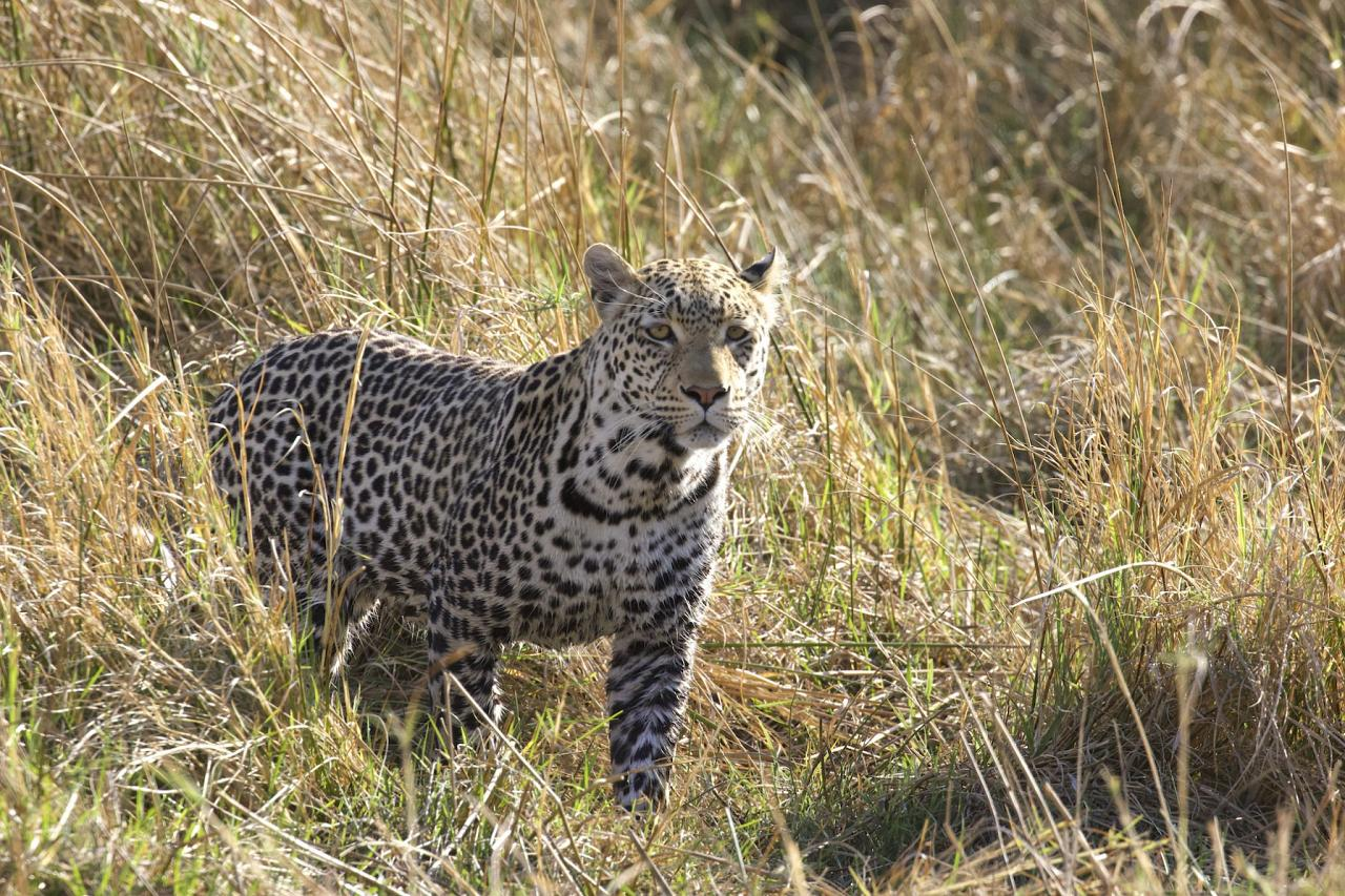 Leopard, South Africa, South Africa Safari, Naturalist Journeys, Wildlife Tour, South Africa Wildlife