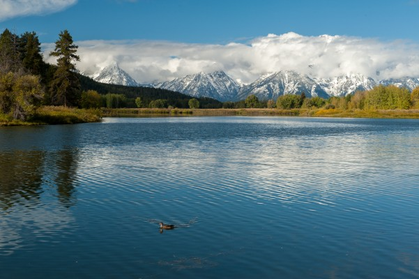 Grand Teton, Yellowstone National Park, Nature Tour, Wildlife Tour, National Park, Naturalist Journeys