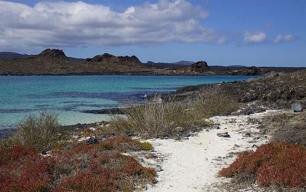 Galapagos, Galapagos Islands, Galapagos Cruise, Naturalist Journeys, Galapagos Wildlife Tour