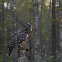 Finland Birding Tour, Finland Nature Tours, Naturalist Journeys, Europe Birding, Norway, Norway Birding Tour